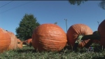 fall weather, pumpkins