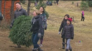 CTV Toronto: Christmas Tree Day