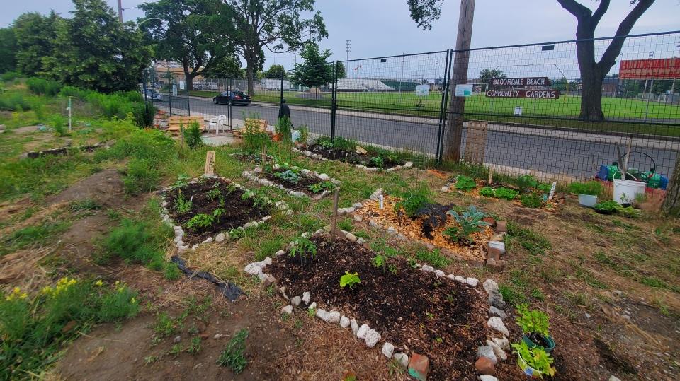 Bloordale Beach Community Garden