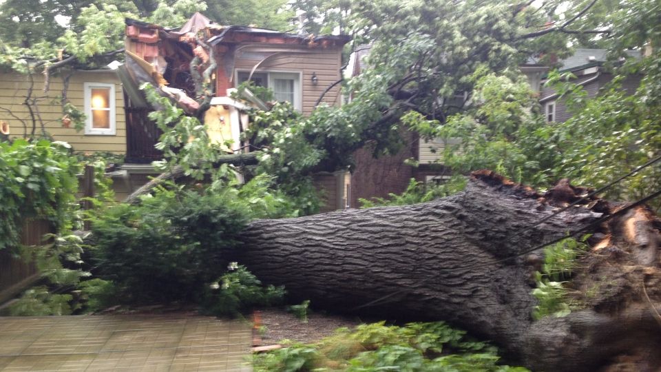 Heavy rains brought a tree down on a house on Willow Ave. in Toronto, Friday, Aug. 10, 2012. (Jeff Wood / CTV Toronto)