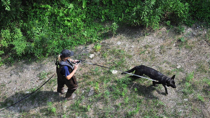 A Police officer and her dog search the Credit River in Hewick Meadows Park in Mississauga, Ont., after police discovered a female severed head on Thursday Aug.16, 2012.  (Aaron Vincent Elkaim / THE CANADIAN PRESS)