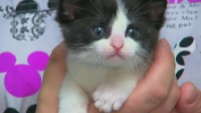 Kitten found stuffed in garbage can